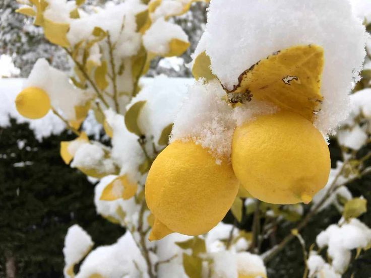 Ronda in Weiss – Schnee in Andalusien!
