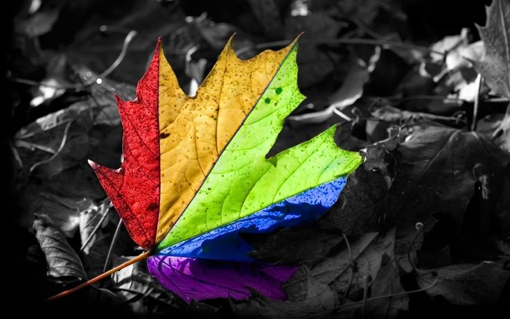 Leaf Multicolor Digital Art Selective Coloring