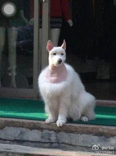 AHAHAHAHAHAHAHA! My keyboard can't convey the amount of AHAHA I have for this dog's haircut