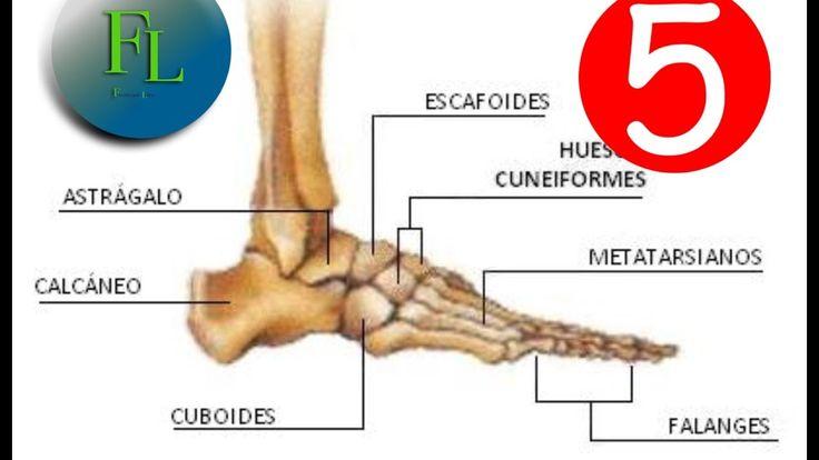 Anatomía, huesos del pie