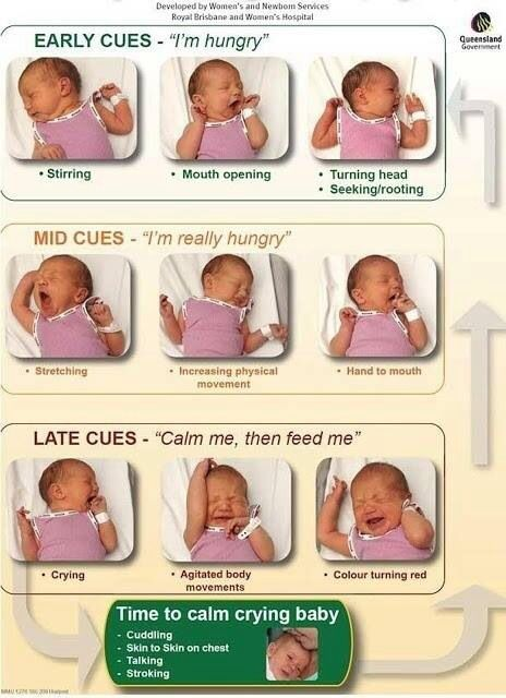 Baby hunger cues.