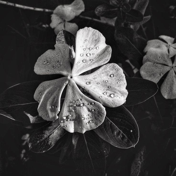 Unas gotas de lluvia