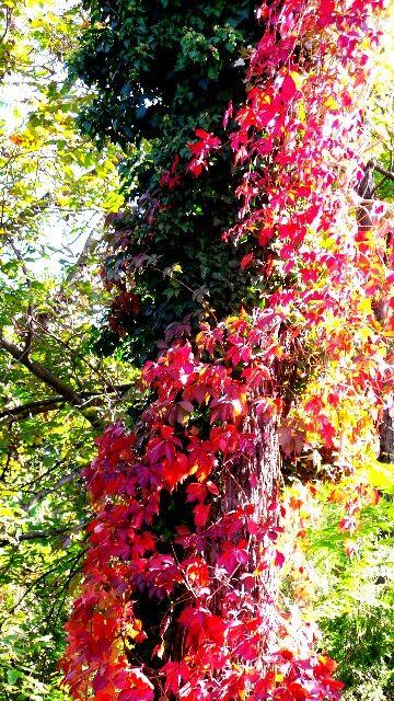 Multicoloured leaves