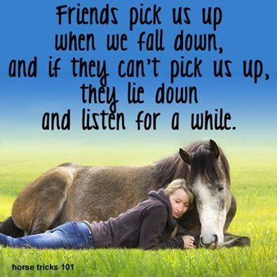 66 best images about inspirational horse quotes on pinterest