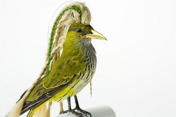 Burung cantik 9 (Karleyfeaver.com)