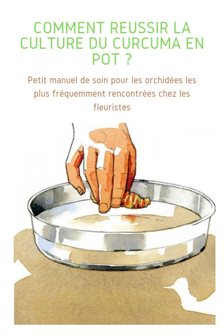 Comment cultiver le curcuma en pot chez soi   Curcuma, Épices et herbes et Pots
