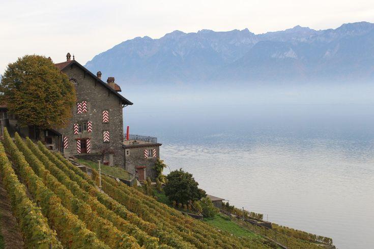 Geneva Blog: Lavaux, Switzerland day trip