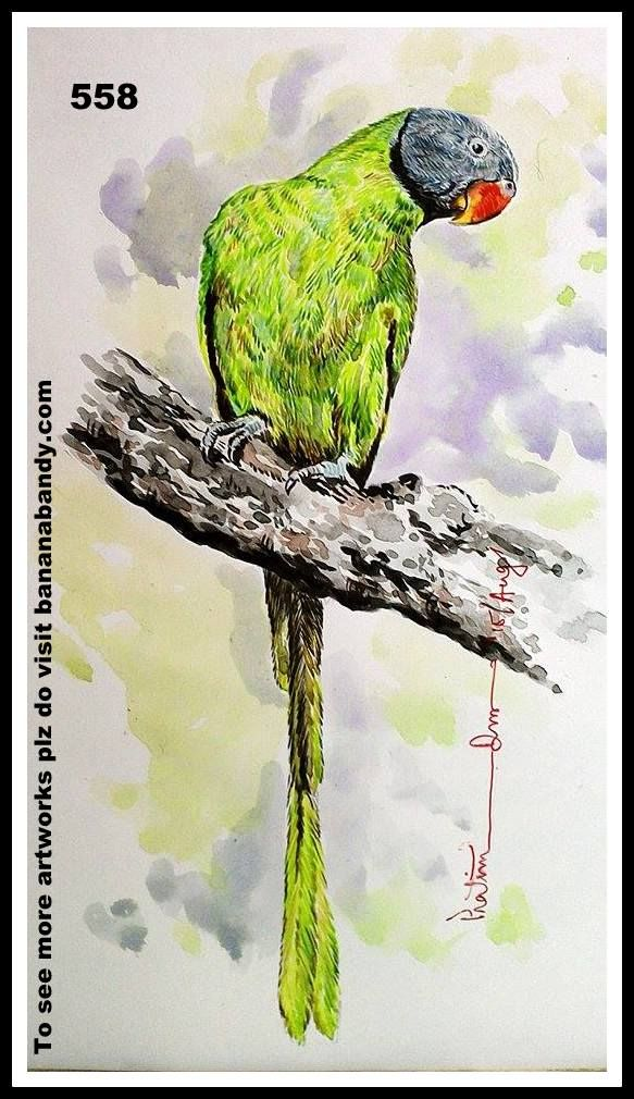 PAKHI DEKHUN PAKHI CHINUN # 532/558(Observe the Bird and recognize)...SLATY HEADED PARAKEET.. WATERCOLOUR...A4...2015... [FROM PHOTOGRAPH OF MR. ADITYA CHAVAN] ... The slaty-headed parakeet (Psittacula himalayana) is the only psittacid species to exhibit altitudinal migration. The species' range extends from Pakistan, to Western Himalayas in India through Nepal and Bhutan and up to the Eastern Himalayas in the northeastern Indian state of Arunachal Pradesh. They descend to the valleys in…