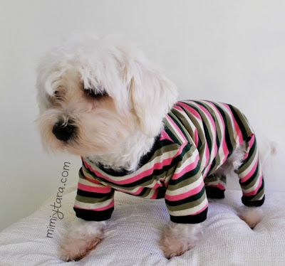 perro con pijama