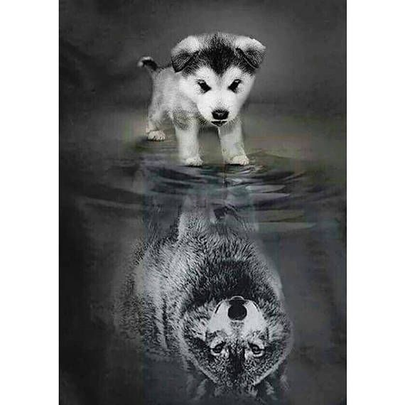 5D DIY Diamond Painting Dog to Wolf Mosaico Punto de cruz Taladro cuadrado completo 3D Dia …