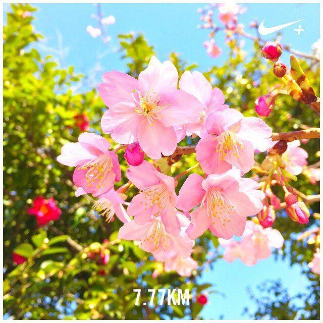 【livewell_always】さんのInstagramをピンしています。 《* ラン二ング中、桜が咲いてた🌸 . 癒された^^ . #springhascome  #blooming  #sakura #tokyo #cherryblossom #2017 #love #sweet  #happiness #flowers #nike #running #777 #odaiba #japan #cameragirl #gopro #ゴープロのある生活 #ラン二ング #ゾロ目ラン #ラッキーセブン #いい事あるかな♡ #桜 #椿 #季節の花 #うつろい #自然と暮らす #ファインダー越しの私の世界 #四季 #やっぱり日本が一番好き》