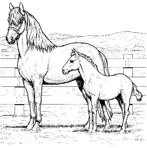 Lots of nice horse coloring pages on this page. Easy to print, too. :) | coloringpages1001.com