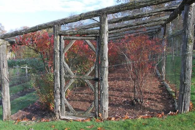 A rustic, wire-mesh covered structure protects the fruit of blueberries, currants, hardy kiwi, gooseberries, raspberries, and more from anim...