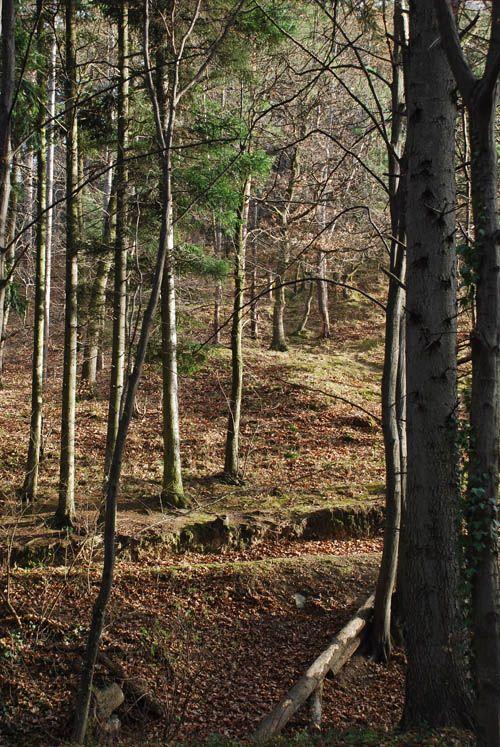 Ciklámen Tanösvény: A Soproni Tájvédelmi Körzet természeti értékeit, növény- és állatvilágát mutatja be. A tájékozódást 60 tábla segíti. A tanösvény jelzése a fákra festett stilizált ciklámen. A soproni Hotel Lővértől induló 8 km hosszú tanösvény 2-3 óra alatt járható be.