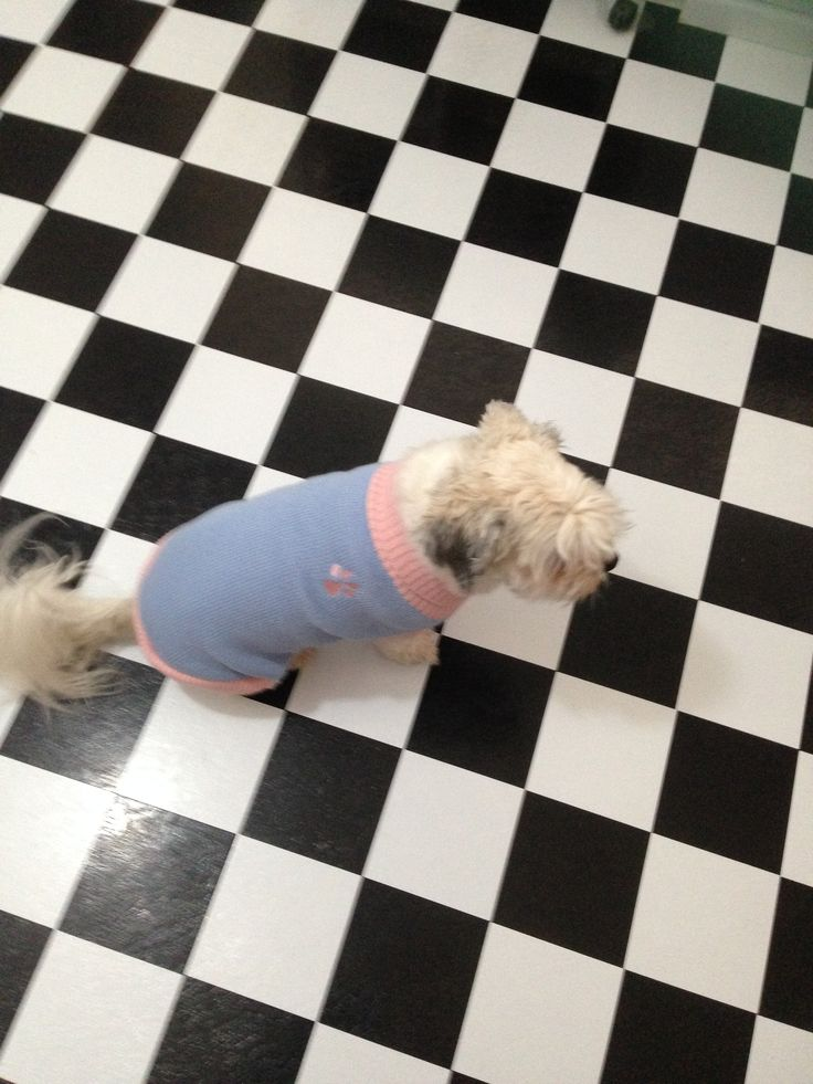 Missy Showing off her new jumper