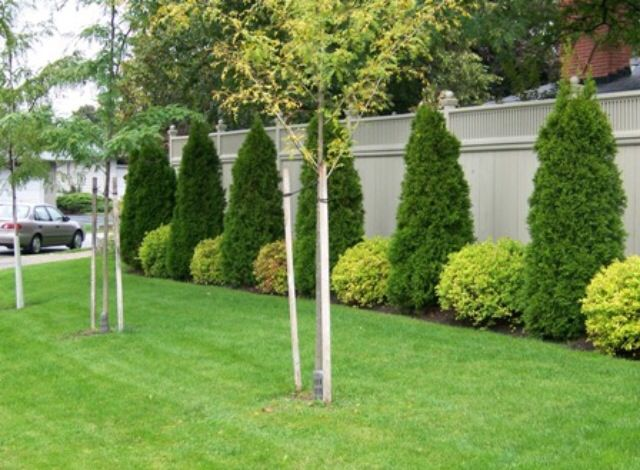 Garden Ideas Along Fence 76 best landscape images on pinterest | backyard ideas, garden