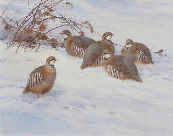 Neil Cox: Winter French Partridge