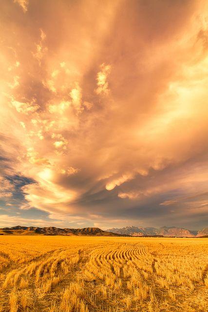 "wheat field by Scott Stringham ""Rustling Leaf Design""*"