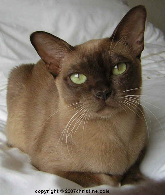 """""""Cats never feel threatened.  They are generally incapable of accepting that anyone could dislike something as perfect as a cat."""" --Kathy Young"""