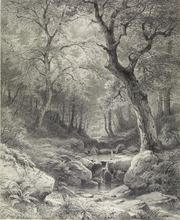 Forest scene paul weber early 1900 39 s pencil on paper for Forest scene drawing