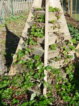 how to build a pyramid strawberry planter wood plans with photos