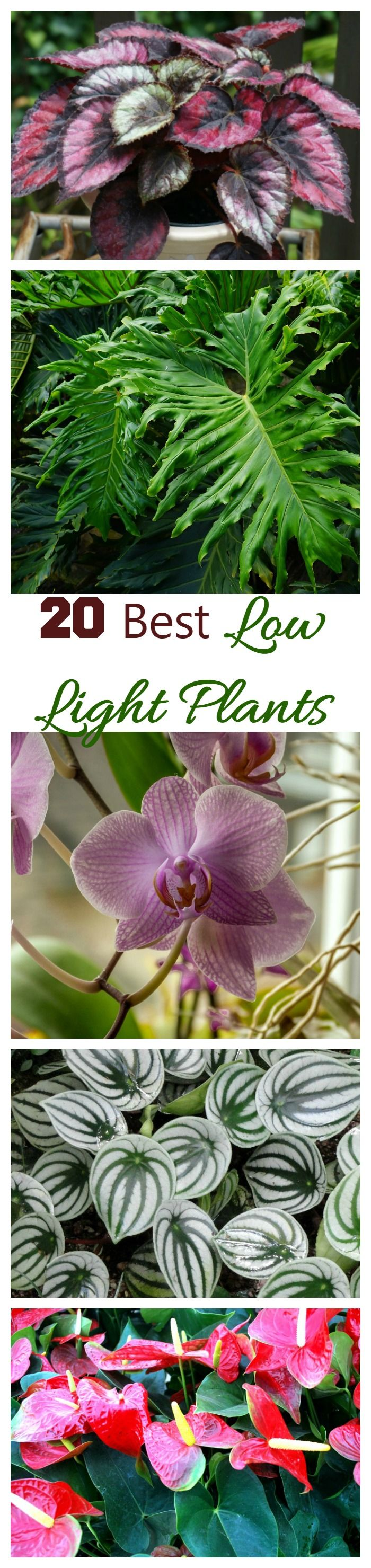 Grow light for houseplants - Low Light Indoor Plants My 20 Favorite House Plants