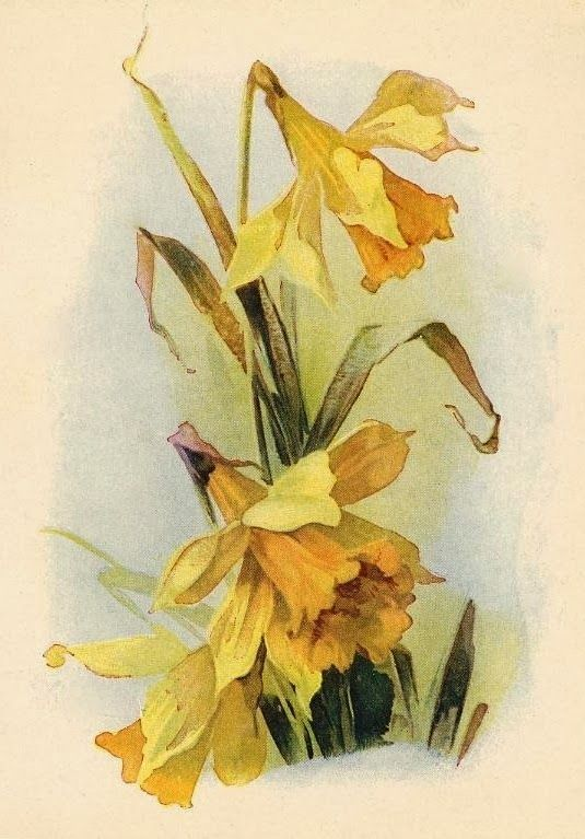 96 Best PrintablesBotanicalsGardens Images On Pinterest Free Printables Etchings And Botany