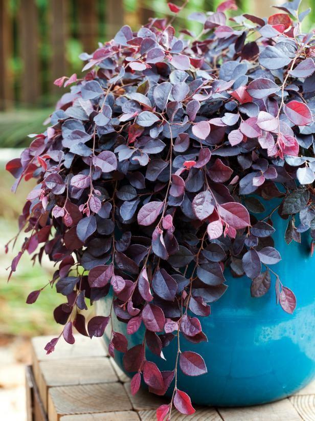 Low Maintenance Houseplants Hgtv In 2020 Easy Care Plants Low Maintenance Plants Container Plants
