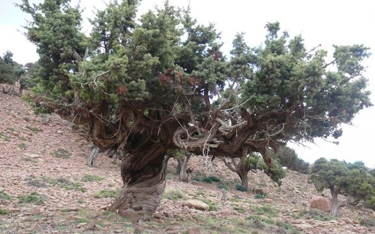 É possível estimar o contributo anual das florestas para a mitigação do efeito estufa?