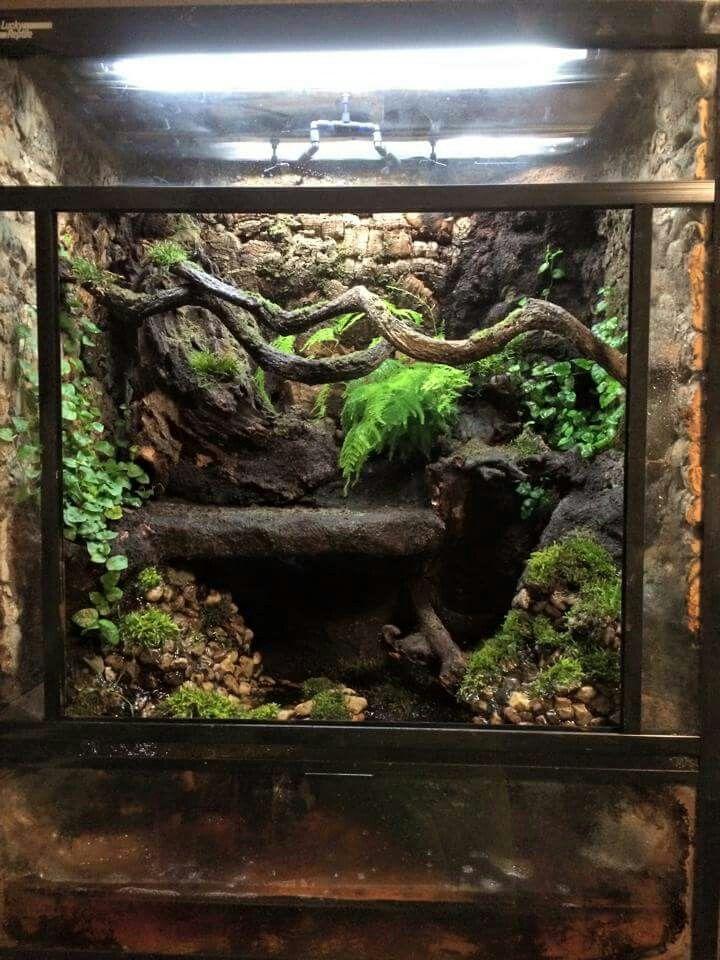 adult gargoyle gecko - viv
