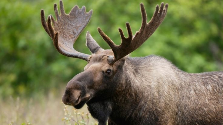 Canadian news headlines      (adsbygoogle = window.adsbygoogle || []).push();    Nine people in northeastern New Brunswick are facing almost 190 charges related to illegal moose harvesting, selling moose meat and the the illegal sale of hunting rights. The charges cover alleged incidents ... #Weather #videos