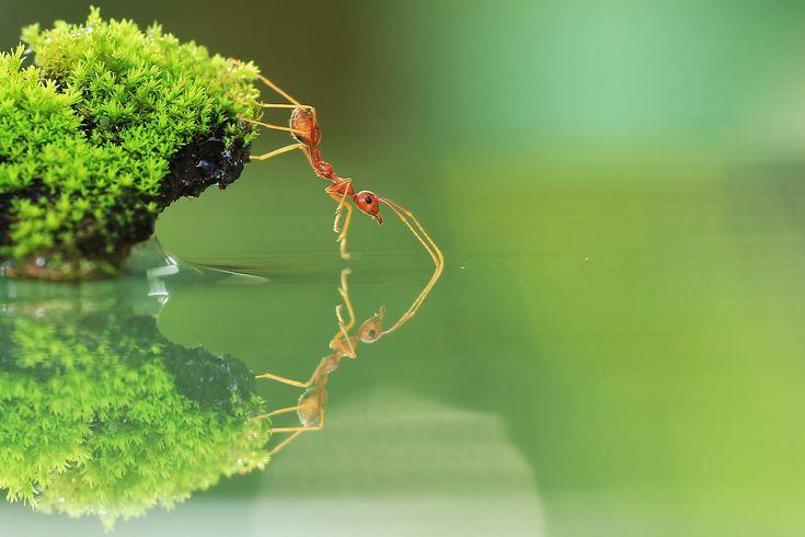 Pin Em Fotos Legais Na Natureza