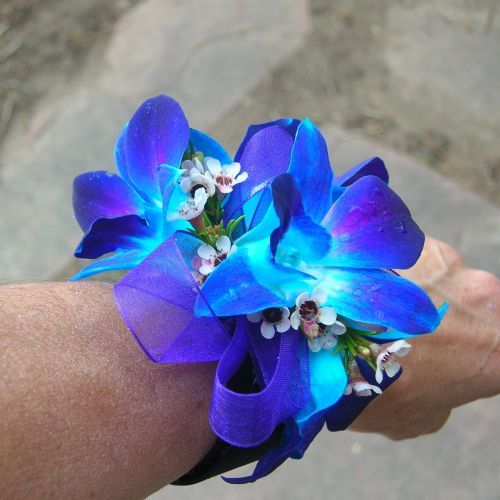 blue orchid cakes | Blue Orchids Prom Corsage [PROM128] - $24.99 : Terra Flowers Miami ...