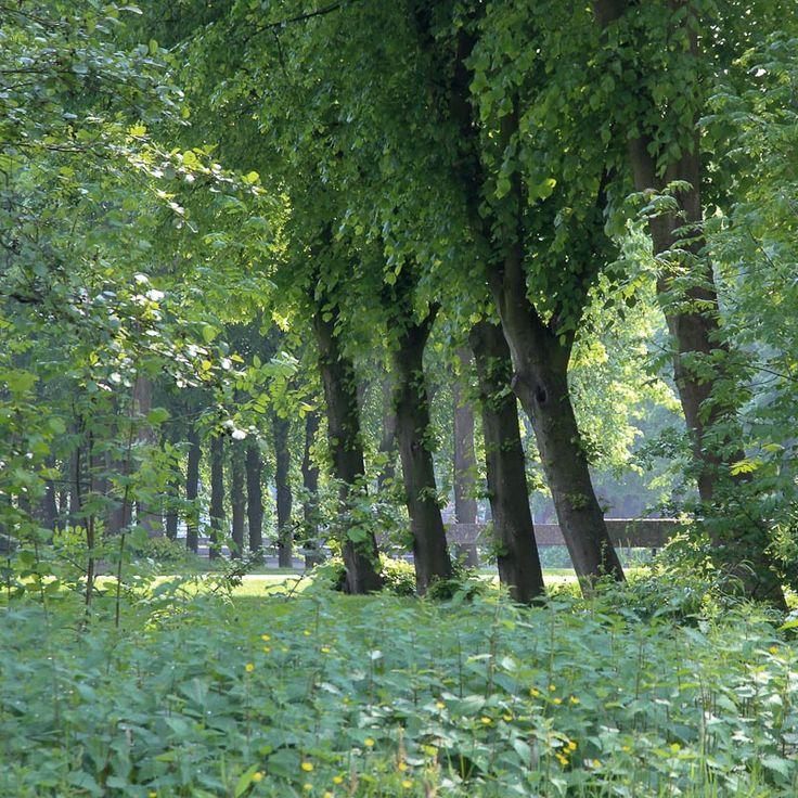Utrecht botanische tuin