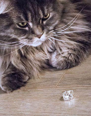 www.panikota.pl   #biżuteria #pierścionek #koty #panikota