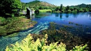 Image result for nelson nz