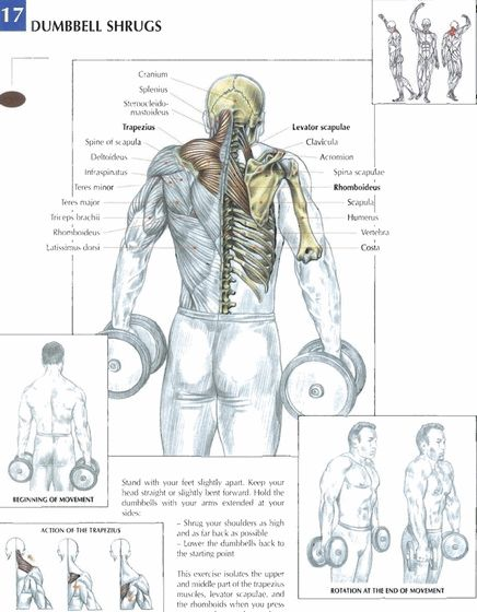 Dumbbell Shrugs #exercise #workout #routine #fitness