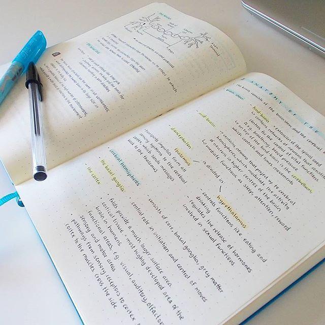 {13.05.17} Ich habe mich nun dazu entschieden, meinen Leuchtturm nicht für ein Bullet Journal zu benutzen, sondern darin meine Neurologie-Aufzeichnungen zu machen ☺ Ich arbeite sowas nämlich ab und zu aus, einfach weil ich gerne mehr darüber wissen möchte :3 Und es ist mir doch zu viel Mühe, einen Kalender selbstständig vorzubereiten, wenn ich einfach einen kaufen kann, der mir genauso gefällt Und auf dem dotted Papier sehen Aufzeichnungen echt schön aus ____________________________...