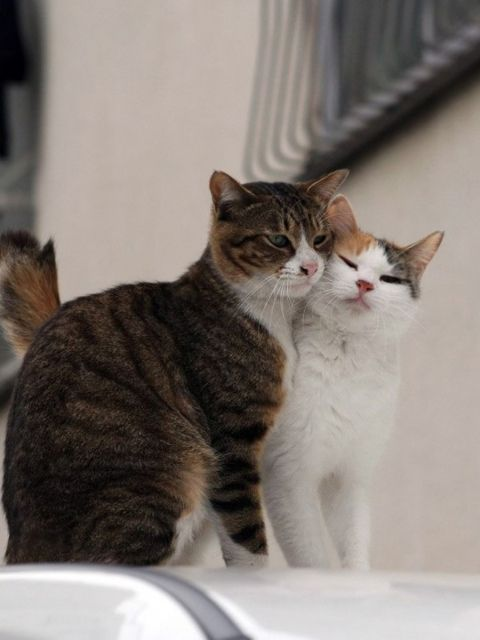Kitty love! Cats can be so sweet. <3