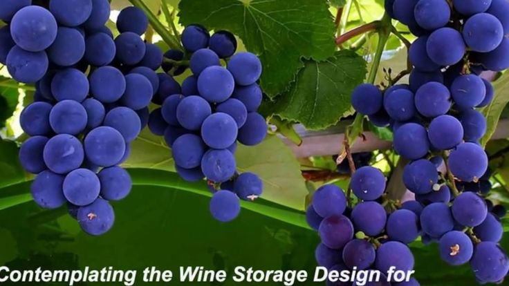 With the passage of time, the wine storage design or the design for the wine cellars has changed. To provide the wine with proper arrangement and storage, the wine cellars are built accordingly. Humans kept on modifying and re-designing according to the need and comfort. Visit: http://signaturecellars.com.au/.