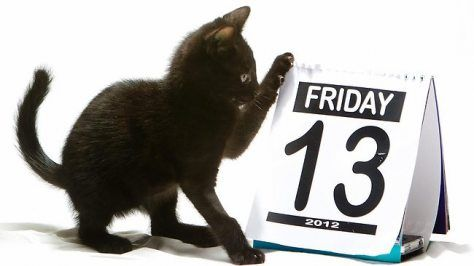 Friday the 13th Funny Animals | It's Friday… The 13th | Kitty Bloger