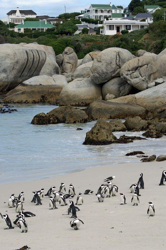 Boulders Beach, Western Cape South Africa