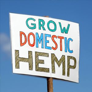 Hemp, a distinct variety of the sativa plant, can be grown for the fibers in the stalk of the plant, or to maximize the production of seeds. Hemp is non-psychoactive and has many uses, ranging from paper, fuel, food, medicines, oils, livestock feed, and hundreds of other amazing useful applications.