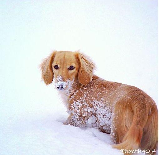 Wee snow dog
