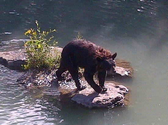 pictures of marineland ontario | The bear - Picture of Marineland, Niagara Falls - TripAdvisor