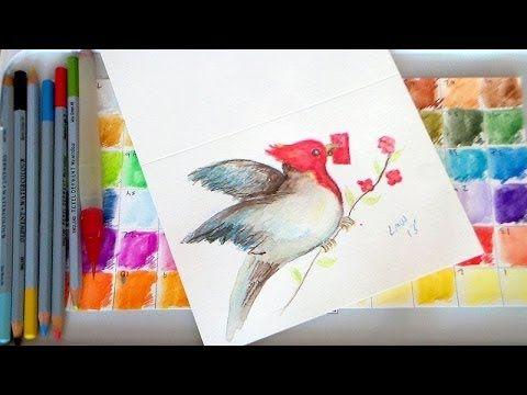 Let's Paint a Brazilian Cardinal! {watercolor pencil tutorial}