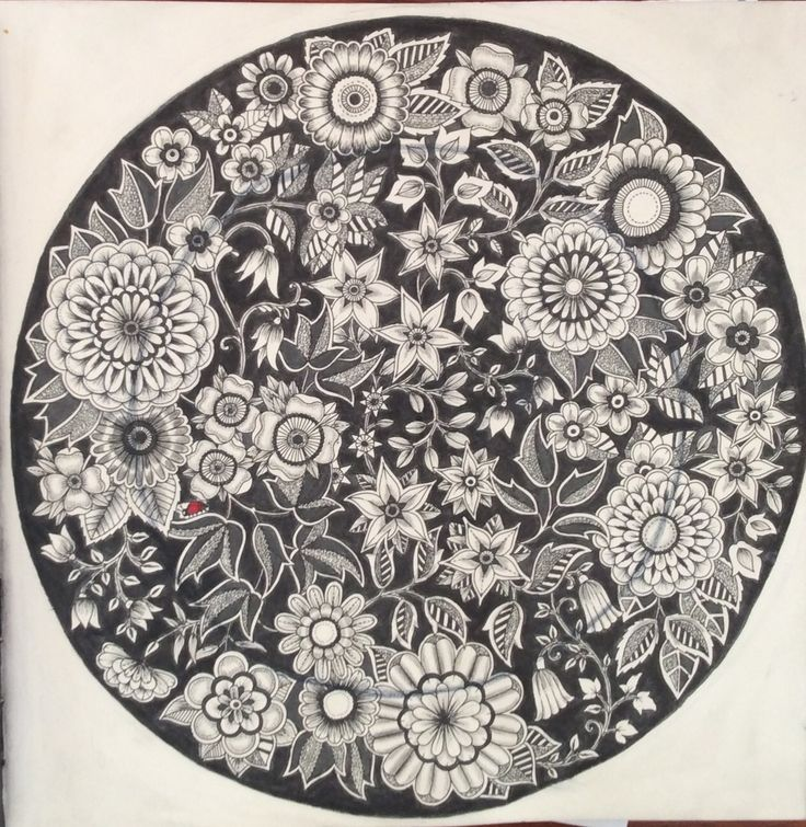 Secret Garden. Johanna Basford. The black plate, coloured by Prue from Colouring+ with Prue