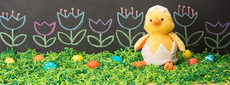Meet our newest Scentsy Buddy, Eggmund the Chick