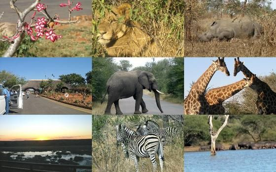 Off course: the Kruger National Park  But definitely still worth it.