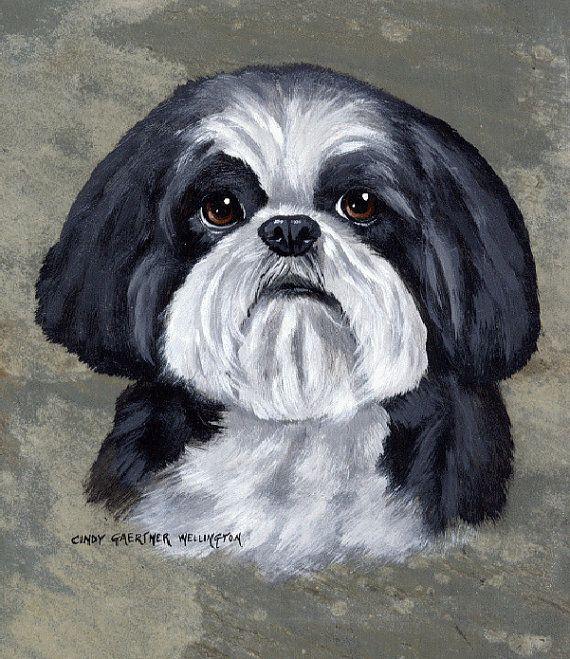 Black and White Shih Tzu dog on slate